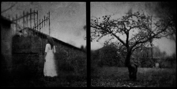 © Vincent Descotils: Le pommier
