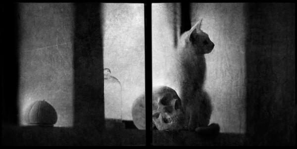 © Vincent Descotils: Vanité