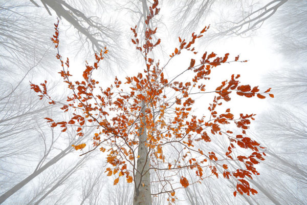 © Sergiu Adrian Paun: Spectacolul naturii, Fotogeografica, Peisaj, premiul I