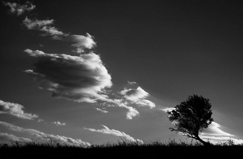 © Cornel Pufan: Dincolo de zgomot si furie