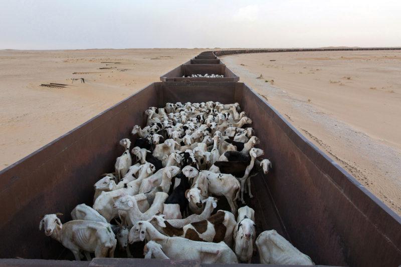 """© George Popescu: """"Mauritania"""""""