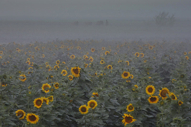 © Mihai Grigorescu