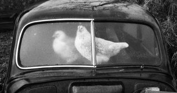 © Martin Parr, Magnum Photos, Rocket Gallery