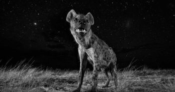 © Will Burrard-Lucas (Marea Britanie, Professional, Natural World, SWPA 2017)