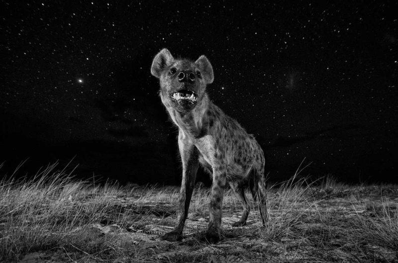 © Will Burrard-Lucas (Marea Britanie, Professional, Natural World, SWPA 2017)