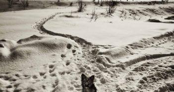 © Andrei Baciu: Viata si intamplarile din jurul podului de la Blejoi
