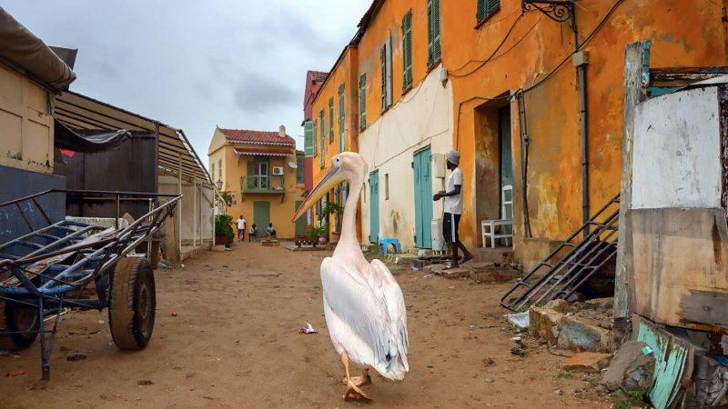 © Radu Mihai Iani, Goree Island, Senegal, 2017
