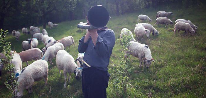 Album Remus Țiplea: Din Oaș în Paști