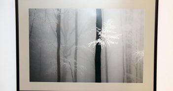 Simay Zsolt, una dintre imaginile expuse.