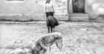 © Silviu Pavel: Dobrogea