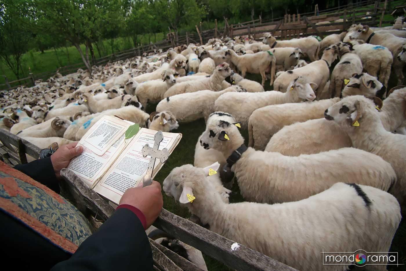 © Remus Tiplea - Confesiuni religioase, Sfintitul si binecuvantatul oilor, Camarzana, 2016