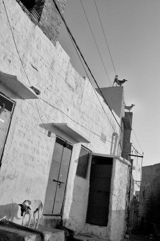 © Alexandru Ilea, Jodhpur, India
