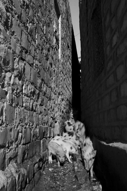 © Alexandru Ilea, Jaisalmer, India