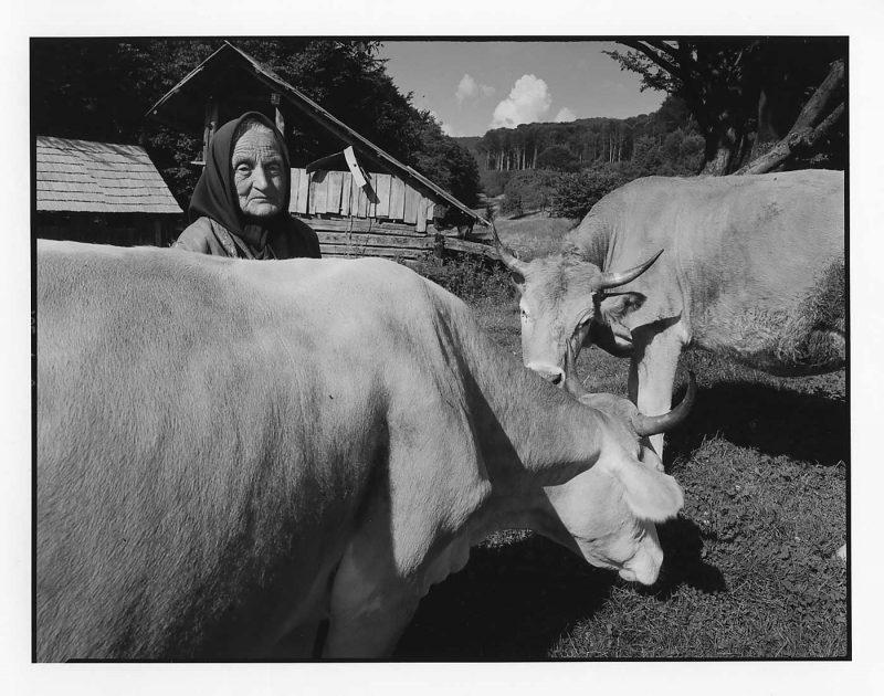 """Mărioara """"Măriuca"""", văduvă și fermieră, își duce cele două vaci la munte, Firiza, Maramureș, 1998 © Jean-Jacques Moles"""