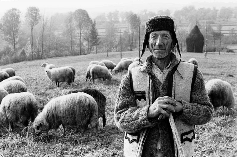 © Dan Dinescu, Cioban, 1988