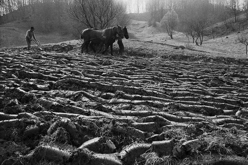 © Dan Dinescu, Bocicoel, 1991.