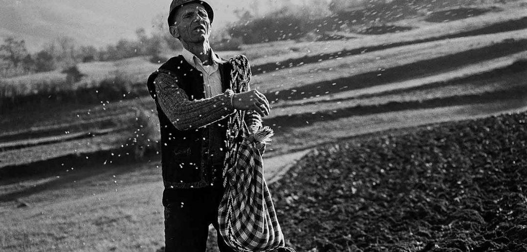 © Dan Dinescu, Ieud, semănător, 1993.
