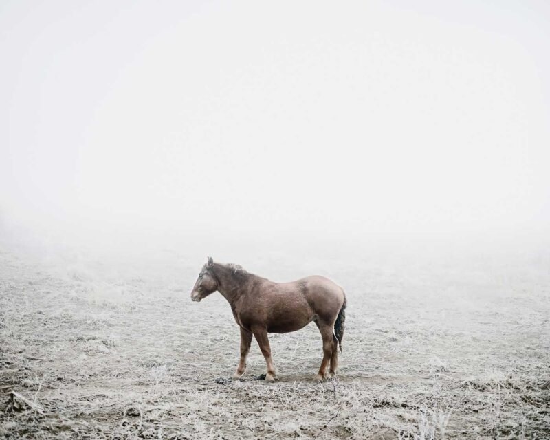 Cart horse (near Silvașu de Sus), 2011 © Tamas Dezsö, Notes for an Epilogue
